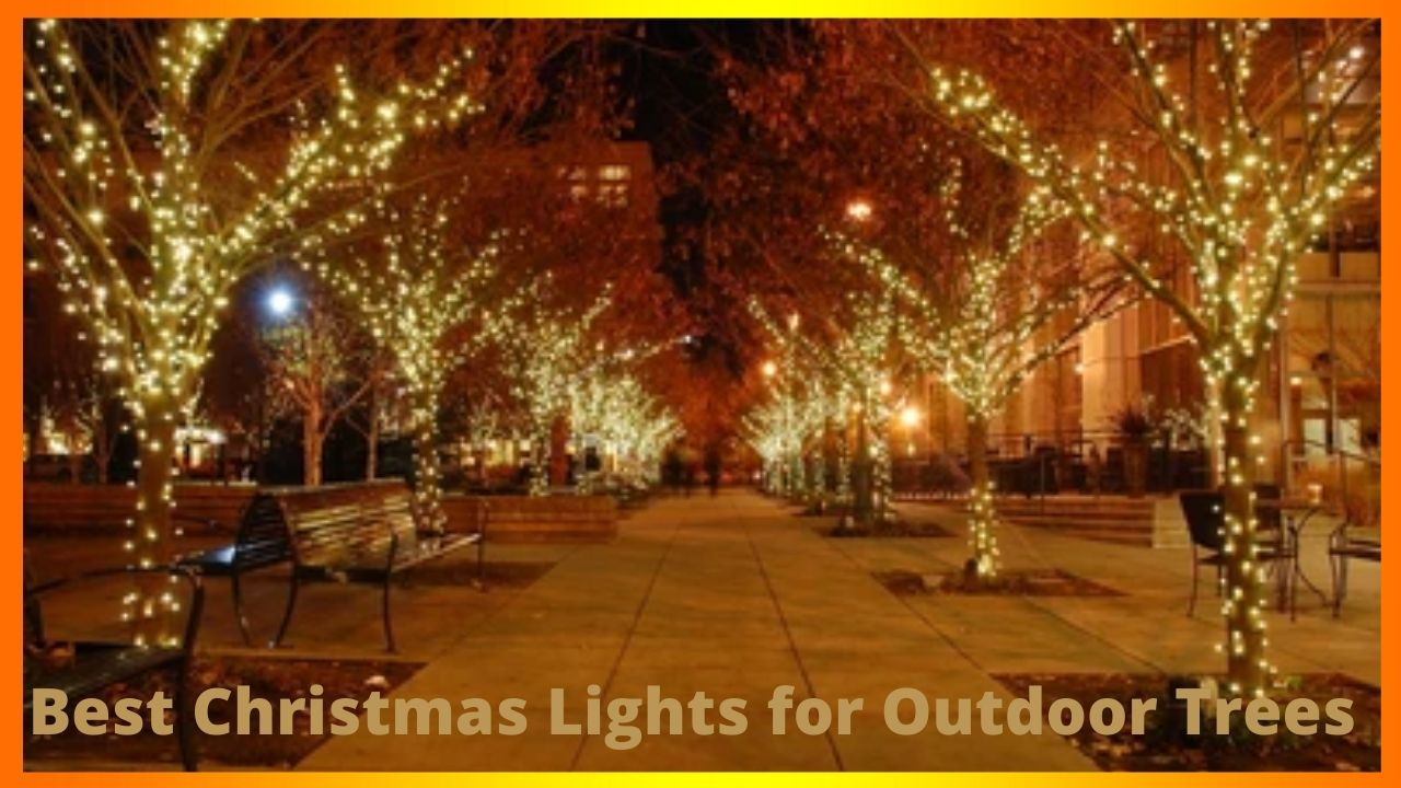 Best Christmas Lights for Outdoor Trees
